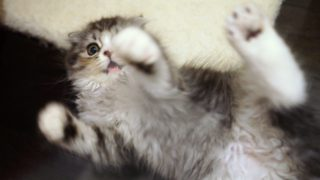 もっと猫に懐かれるための方法を3ステップで紹介!(上級編)