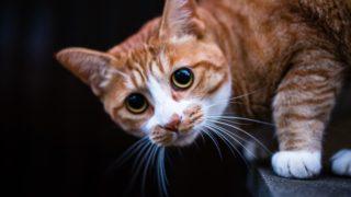 猫に懐かれるための方法を5ステップで紹介!(初級編)