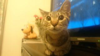 猫ちゃんの里親になる方法!!里親になるまでの流れをご紹介