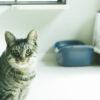 猫ちゃんを飼うための準備 - 最初に必要な道具を紹介!