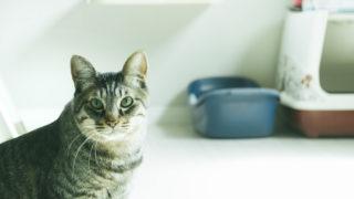 猫ちゃんを飼うための準備 – 最初に必要な道具を紹介!