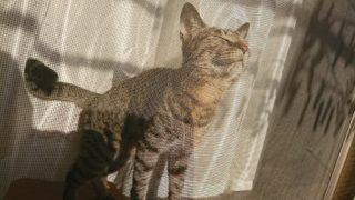 2017年4月ツイート分 可愛い我が家の猫写真8選
