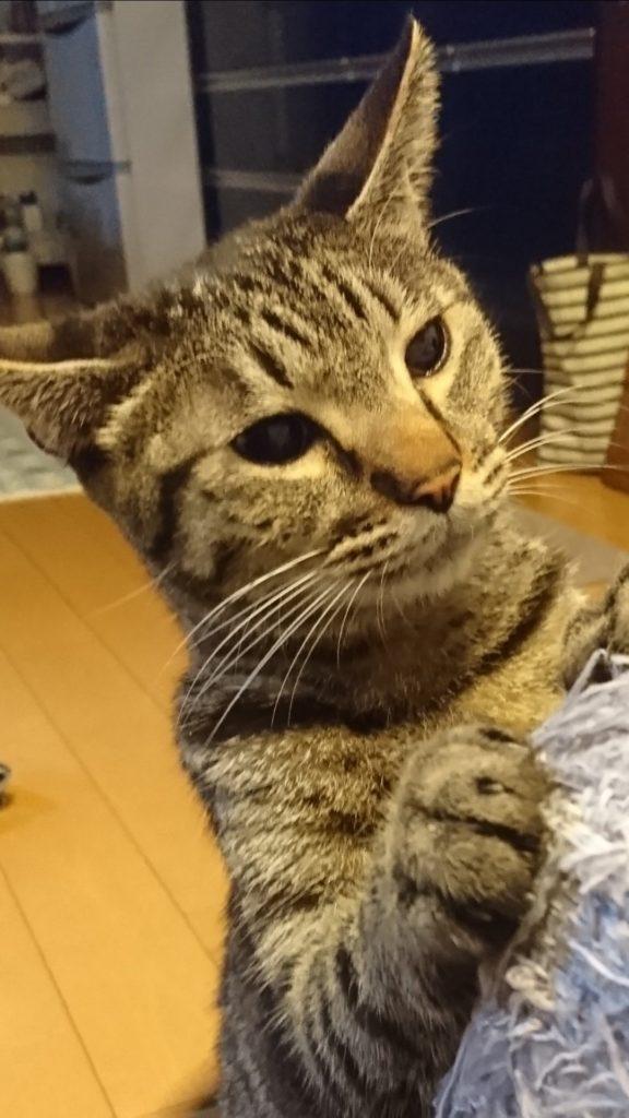 0424-cat-photo