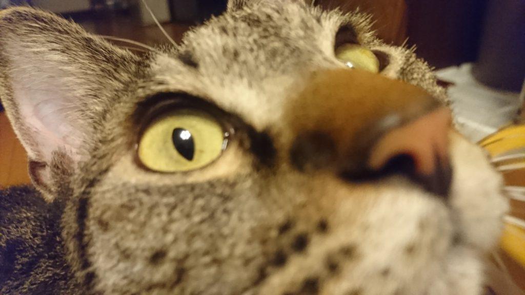 0425-cat-photo2