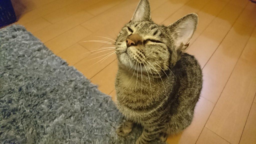 0426-cat-photo