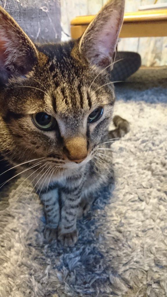 0427-cat-photo