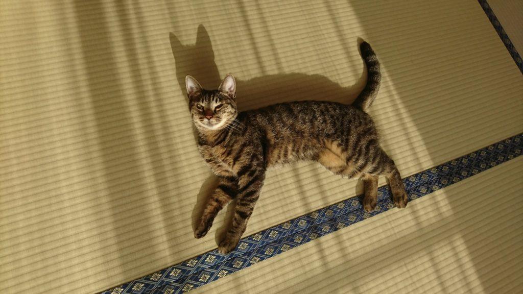 0430-cat-photo2