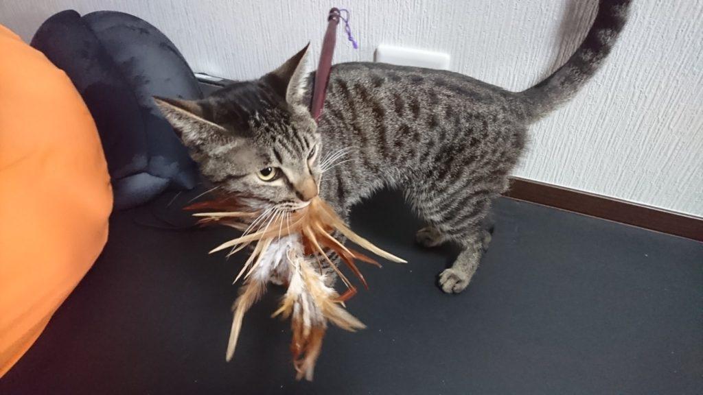 0503-cat-photo