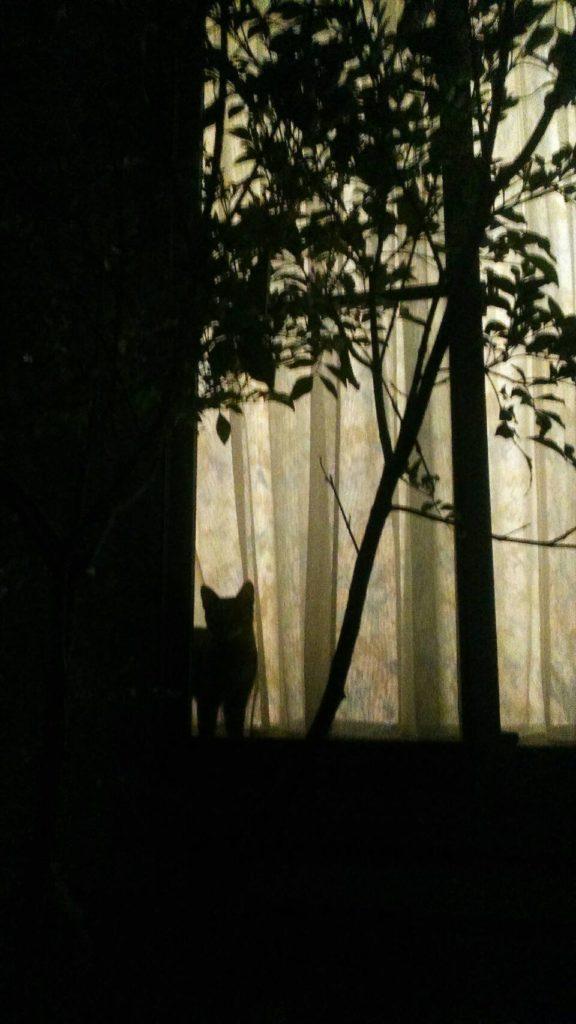 0503-cat-photo3