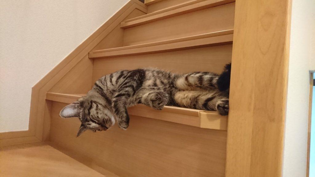 0504-cat-photo
