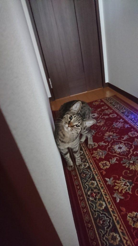 0430-cat-photo