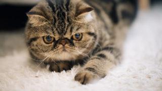 犬や猫、鳥や爬虫類などの里親募集をしているおすすめサイト3選