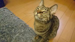 猫を飼っている人なら共感間違いなし?我が家の猫あるある6選!(我が家の猫ちゃん)