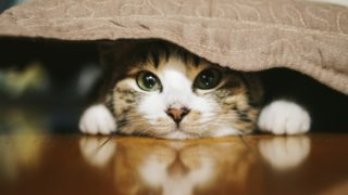 猫を飼っている人なら共感間違いなし?我が家の猫あるある6選!