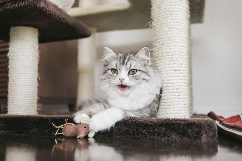 猫ちゃん大興奮!猫カフェにも!猫が喜ぶおすすめおもちゃ7選!